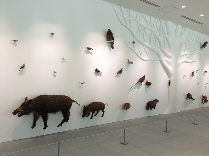 館内に入ると壁一面に動物たちが。豊かな自然の象徴とされるブナの木が中央にそびえ、その周りに高尾山に棲む動物たちが展示されています。