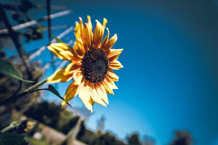 何事にも悲観的ですと、どうしても明るい晴れやかな気分にはなりにくく笑顔も減ってしまいますよね。アランの幸福論には「悲観主義は気分によるもの、楽観主義は意志によるもの」とあります。悲観していることに自分で気づいたときは、意識して楽観へハンドルを切ってみて。