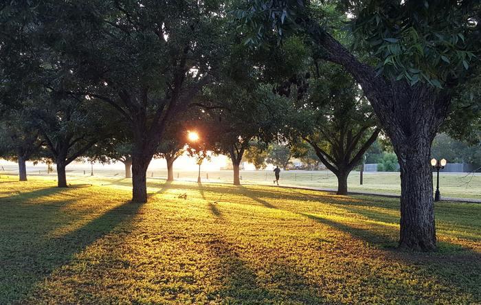 近所から少し離れた別の公園に向かってみるのも◎。公園は緑が多いので、清々しい気持ちでランニングを楽しめます。ランニングコースを設けている公園もあるので、人目を気にせず思いっきり走りたい人にもおすすめです。