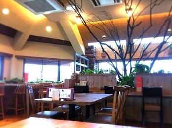 テーブル席があるメインエリアの中央には大木が。  お店のシンボルなのだとか。