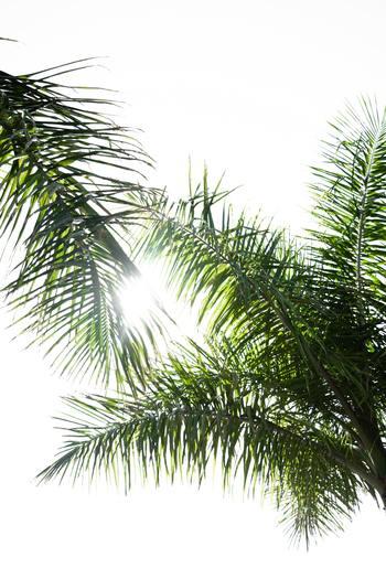 梅雨明けとともに一気に気温が急上昇。今年の夏は例年以上に暑く、「猛暑」を超えて「酷暑」になっています。