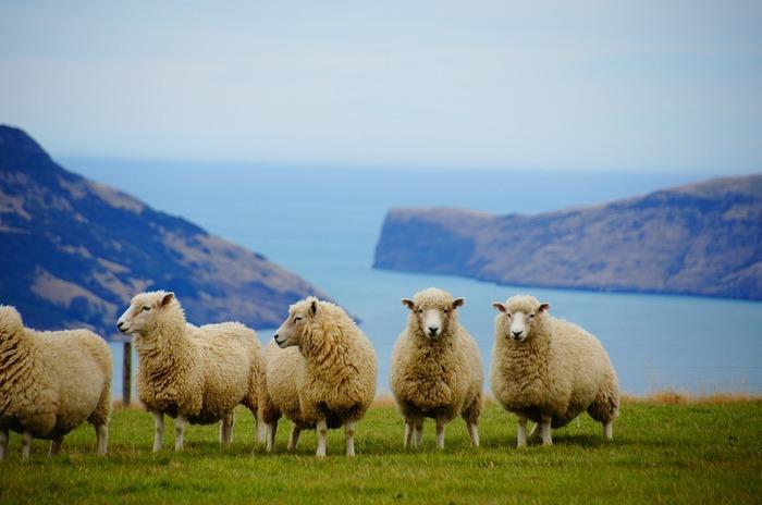「神々が自分たちの休息のために作り上げた地上の楽園」という言い伝えがある【ニュージーランド】。自然のほどんどが、「手付かず」あるいは「それに近い状態」で保護されています。それゆえ、希少で、ユニークな野生動物たちにも出会うことができるのです!