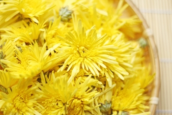 食用菊にはβ-カロテンやビタミンC、葉酸などの抗酸化作用のある成分が含まれています。昔の人は体にいい食べ物だと経験から知っていたのもかもしれませんね。