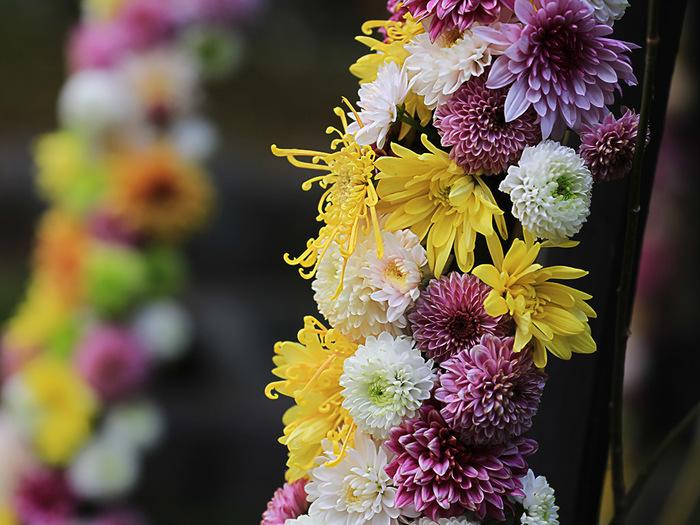 9月9日は「重陽(ちょうよう)の節句と呼ばれ、かつてはひな祭りや端午の節句を含む「五節句」の中でも最も盛大に祝われていました。