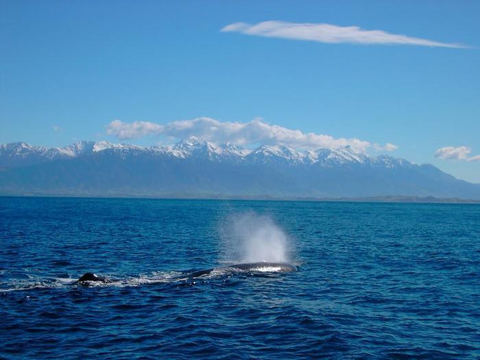 海洋生物最大の哺乳類である、クジラの優雅で壮大な姿は、まさに圧巻。思わず歓声があがることでしょう。