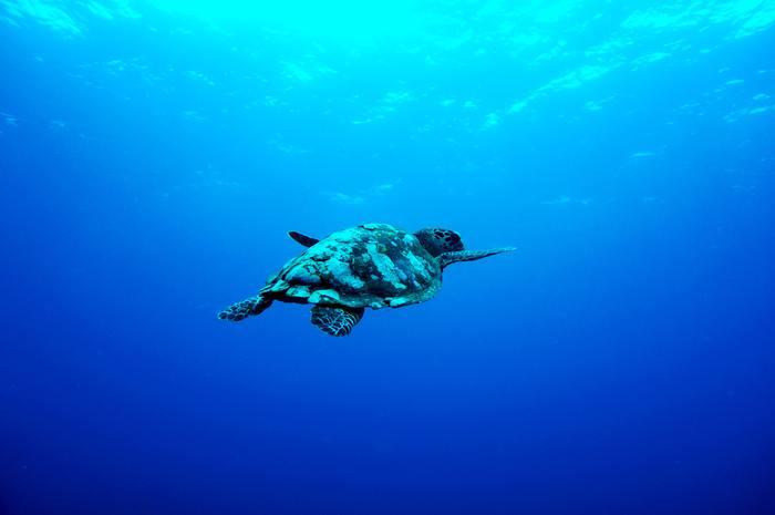 海の透き通る青に魅了せられたり、イルカに癒されたり…海の神秘的な美しさはもちろん、自然界で生き残っていく厳しさや自然の営みをありのままに映し出しているのも魅力です。生命力に溢れた海の世界は、ドラマティックで圧倒されること間違いなし!
