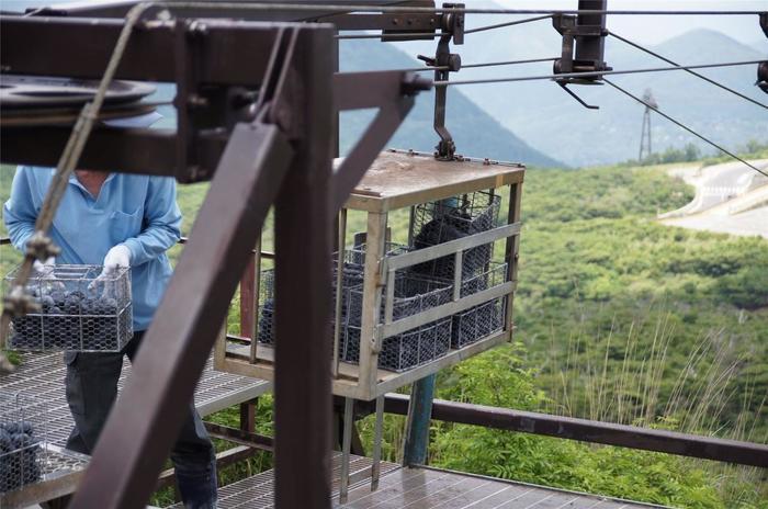 黒たまごが作られているのは、閻魔台に建つ「玉子茶屋」横の温泉地。噴煙地と富士山が望める絶景の場所です。  『黒たまご』は、生玉子を約80℃の温泉で1時間程茹でた後、蒸気で15分程蒸し上げたもの。殻が黒いのは、温泉の中で殻に付着した鉄分が、温泉の硫化水素と結合して硫化鉄となるためです。【温泉地から専用ロープウェイで運ばれる『黒たまご』】