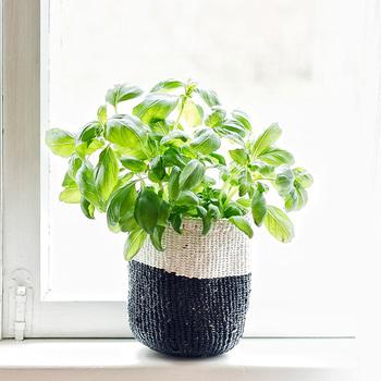 鉢カバーを手編みのバスケットにチェンジ。グリーンが映えてより涼しげな印象に。いくつか並べて置いても素敵ですね。