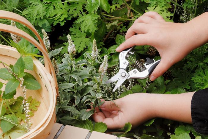 このカーブのおかげで野菜や果実を形に沿ってカットすることができるので、野菜や果実をキズつけることなく採取できます。