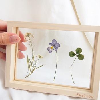 自然のお花を、こんなふうに透明なガラスフレームで両面を挟みこめば、立体感のある世界を楽しむことが♪ナチュラルな雰囲気のインテリアに。