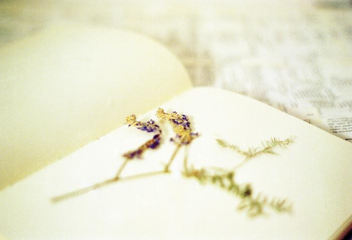 """花の美しさは一瞬。すぐに枯れてしまいます。 でもそんな自然の美しさをそのまま残しておけるのが""""押し花""""です。その押し花を使って、まるで夢の世界のようなアートを作り上げる""""押し花アート""""をご存知ですか?"""