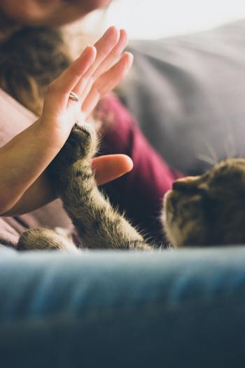 今回は、そんな猫をモチーフにした雑貨や器などの可愛い猫グッズを集めてみました! たまらなく猫が好き!という自分のために、猫好きな友達へ… とっておきの猫グッズを選んでみませんか♪