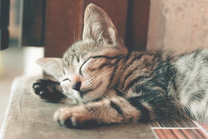 猫の可愛い画像