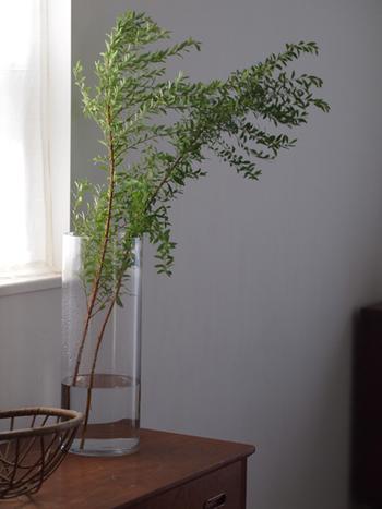 太めのどっしりとした花器は、それだけで存在感がありますね。たっぷりとしたグリーンを飾っても安心感があります。