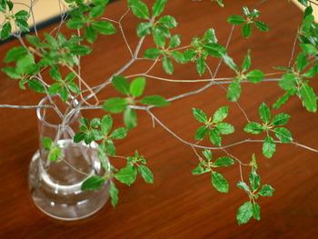 いろいろな方向に枝を伸ばすドウダンツツジにもフローラベースはぴったり。フレッシュグリーンが美しく映えます。