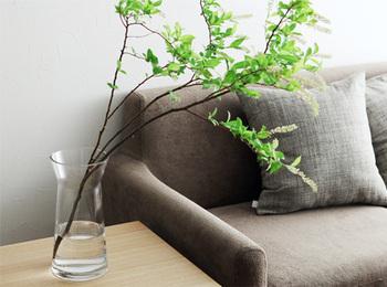 曇りのない透明度の高いクリアガラスの花器は、口がほんのすこし広がって、枝ものの広がりをナチュラルに支えてくれます。ひと枝でも様になりますね。