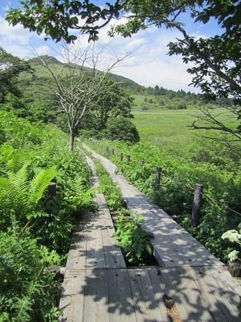 春から初秋にかけては、野鳥たちのさえずりのもと、高山植物や湿生植物、珍しい蝶との出会いがお待ちかね♪(筆者撮影)