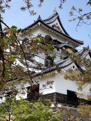 天守閣が残る城の中でも国宝に指定されている彦根城。その周囲も特別史跡に指定されている、国内でも見応えのあるお城です。時間によっては、人気のゆるキャラひこにゃんも訪れます。
