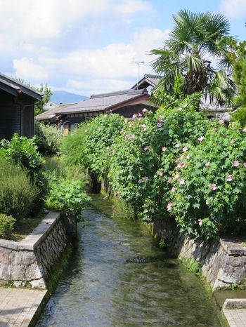 高島市新旭町針江では、比良山系からの地下水が各家庭から湧き出し、水路となって集落中をめぐっています。
