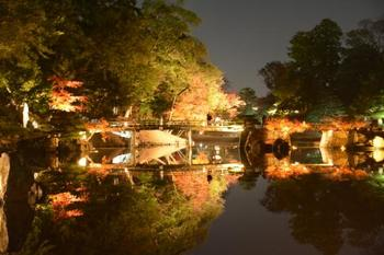 彦根城の北東にある大名庭園、名勝玄宮園。毎年11月になると夜間ライトアップもされ見応えありです!