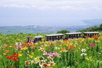園内にはお子さまが喜ぶ天空ゆりトレインが走り、ワンちゃん広場もあるので愛犬とも一緒に楽しめます。眼下には奥琵琶湖が広がる最高の眺望です。