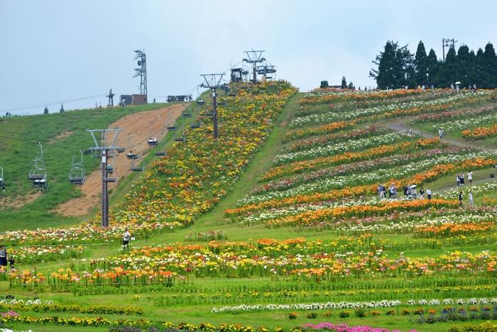 標高680m。冬はスキー場として楽しめ、初夏から秋にかけてはフラワーパークとして楽しめる箱館山は、ファミリーに人気のスポットです。