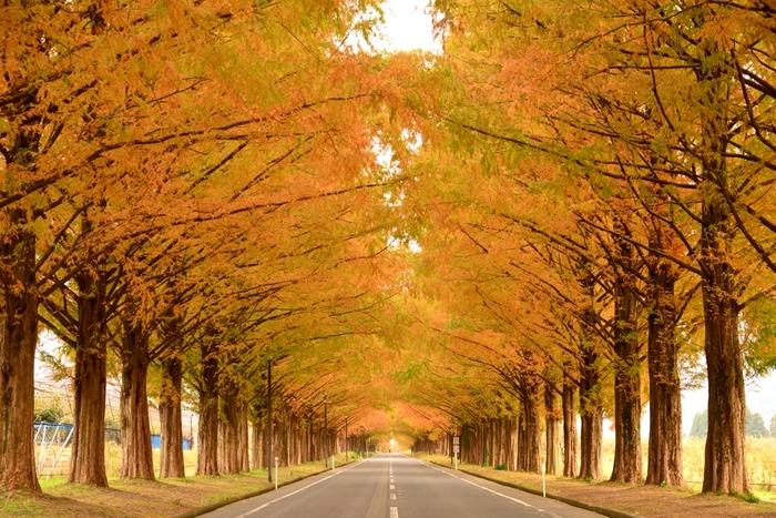 秋が深まったころもロマンティックな雰囲気ですね。