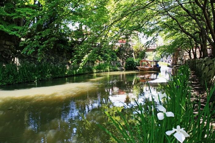 近江商人発祥の地であり、琵琶湖に通じる運河として発展の役割を果たした人工水路八幡堀などが有名な近江八幡。水郷めぐりも人気で、滋賀を代表する観光名所となっています。