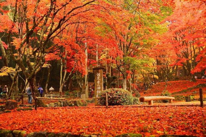 落葉で辺り一面埋めつくされ「赤」一色に染まる景色は見事の一言に尽きます。天然の深紅の絨毯の上を歩いて秋を感じる贅沢な時間を。近年有名になってきているので、人が少ない早朝の時間帯がおすすめです。