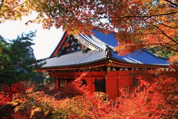 京都山科にある寺院。京都七福神のひとつ毘沙門天を本尊としています。「毘沙門堂(びしゃもんどう)」へと続く階段がモミジで埋め尽くされる景観が有名ですが、本堂内の紅葉も見事です。朱色の建物と燃えるような赤がリンクして、見る人の心を引き付けます。