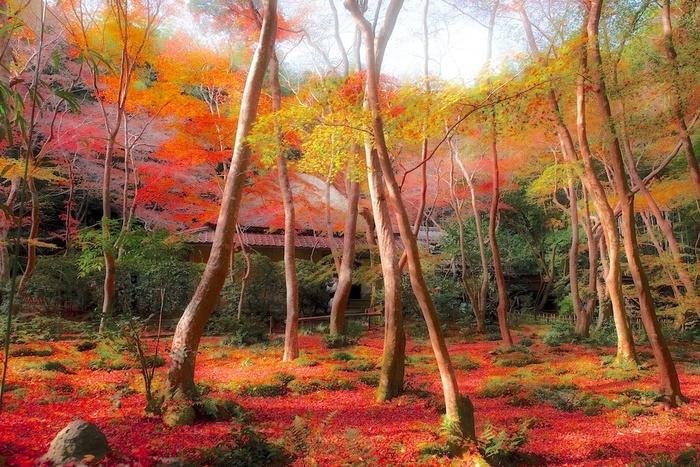 「祇王寺(ぎおうじ)」は竹林に囲まれたつつましく落ち着いた雰囲気のお寺。「平家物語」にも登場し平清盛の心変わりによって都を去った祇王が出家した尼寺として知られています。  カエデやモミジが色づき、晩秋の頃には散った葉が苔の庭を埋めつくす様が、この世のものとは思えない美しさです。散りゆく葉の様子も風情があって素敵ですよ。