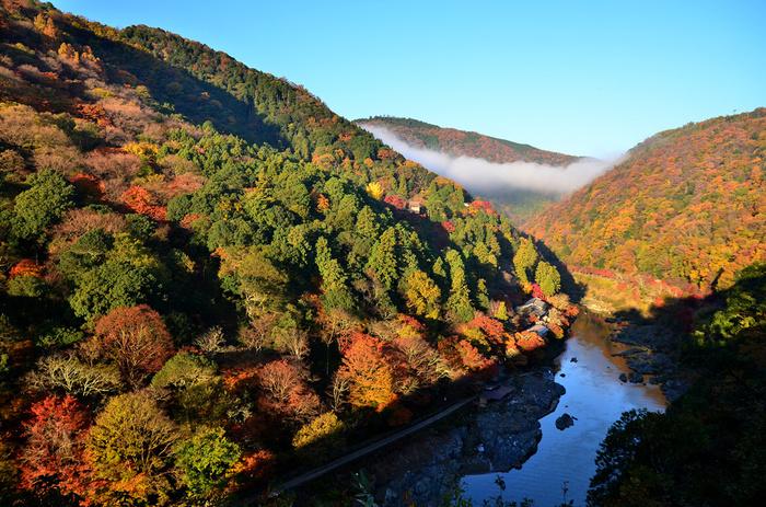 京都の嵐山、有名な「渡月橋」から徒歩で訪れることができる「亀山公園」。ここは紅葉シーズンでも比較的人が少なくゆったりと紅葉を楽しめるスポットです。特に展望台から望む「保頭川の渓谷」は圧倒的なスケール!赤やオレンジ、黄色と山全体が彩られた絶景に思わず感動を覚えます。