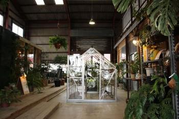 鹿児島県の大隅半島にある鹿屋市で観葉植物などを販売するAraheam。自社農場では多肉植物、サボテン、観葉植物、チランジア、ハーブ等を生産・養生し全国へ出荷しています。