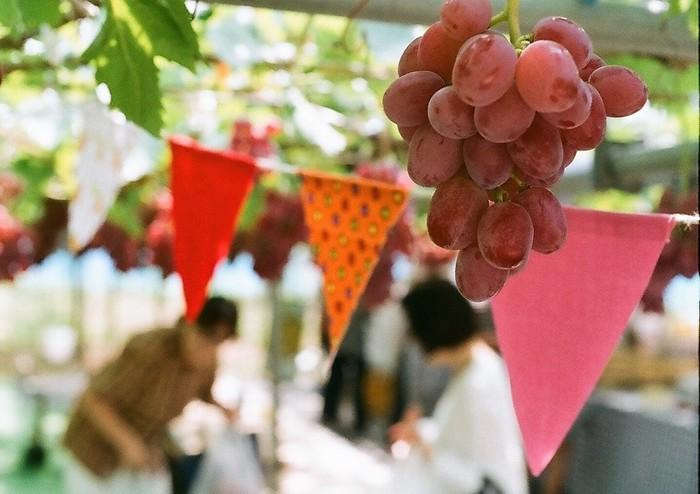 モモにブドウに無花果、洋ナシ♪ 産地ならではの極上フルーツパフェを食べに行こう!