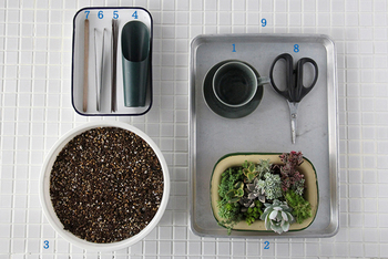 用意するものは簡単!多肉植物の苗と土さえあれば、あとは家にあるもので何とかなりますよ♪細かい作業をするなら、ピンセットがあると便利です。