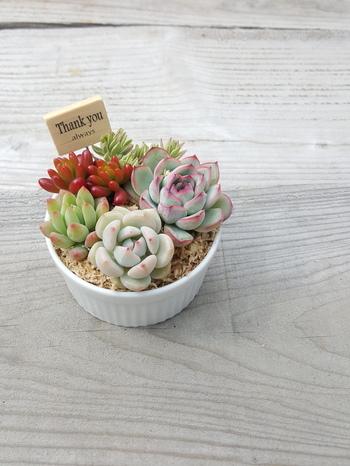 一番スタンダードな、テーブルに置いて飾る「スタンド型」。とっておきの植木鉢を使うのも良いですが、食器で代用するアイデアをご紹介。  こちらは、ココット皿を鉢として、寄せ植えしたもの。このように小さくまとめたタイプは、たとえばダイニングテーブルに置いても可愛いです。真っ白な陶器なので、清潔感があり爽やかな雰囲気になりますね。プレゼントにも良さそう。