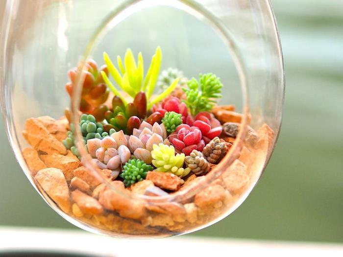 """植物をガラス容器などで栽培する""""テラリウム""""は、近年人気ですね。もちろん、多肉植物の寄せ植えにもおすすめ。涼やかなガラスの中での、美しい緑の世界に癒されます。  こちらはハンギング型。日差しが当たってキラキラと輝き、なんてきれいなんでしょう。"""