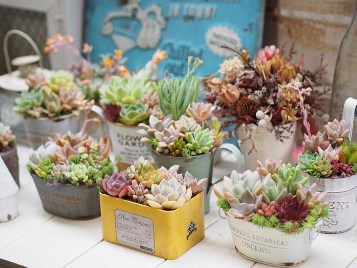 ブリキは、多肉植物と相性がとてもいいようで、寄せ植えによく使われます。とてもナチュラルなイメージで、お部屋を優しい空気で満たしてくれます。
