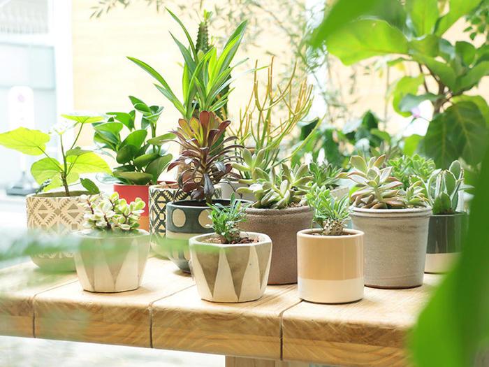 サイズ感は、根が窮屈にならない、適度な大きさのものをチョイス。鉢が小さすぎると、中で根が絡まりあって、根腐れの原因になってしまいます。