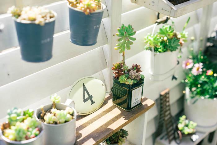 多肉植物を育てる際に最も大切なことは、「日当たり」と「風通し」が良いことです。ほとんどがベランダなどの屋外で育てたほうが元気で、きれいに育ちます。室内で育てたい場合は、太陽の光が届きやすい、窓辺などが好ましいです。できれば1日約5時間ほど日光浴できるのが理想的。  真夏は厳しい直射日光を避け、明るい日陰に。冬は寒すぎるので、室内に入れてあげましょう。数日留守の時などは、直射日光が当たらない、よく風が通る場所に置いてあげてください。