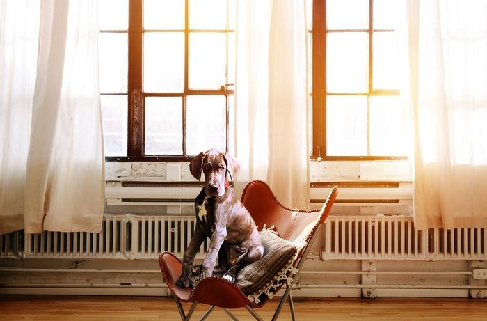 家事の合間で一息入れたいときに使うなら、チェアがおすすめ。ちょっとした時間でも気軽に腰をおろせて、座り心地もいい…。たとえば、窓辺に置いてお気に入りのクッションを添えて座れば、家事の疲れも癒せそう。  ✻座っている時間・1時間ほど ✻求める座り心地・★★★★☆ ✻持ち運びのしやすさ・★★★★☆