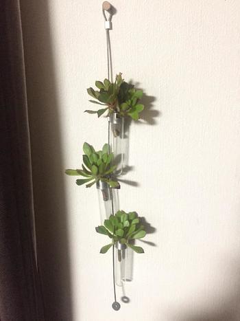 「挿し木」の方法は、まず親株の根元の少し下(土にさす部分を少し残すため)をカット。カットした部分の切り口を乾燥させます。この時、お水は一切あげません。このような小さな入れ物に立てて置いておくと、真っ直ぐ伸びて植えやすくなりますよ。