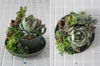 完成!高低差をつけるのも、寄せ植えをバランスよくまとめるためのポイントのようです。サイズ感の違う多肉植物を合わせるのも変化が生まれて素敵ですね。
