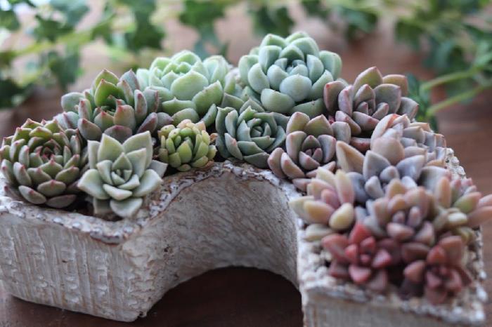 パープル、ブルー、グリーンのグラデーションは、エレガントで大人っぽい印象。多肉植物ならではの美しさが光ります。