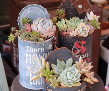 サビがいい雰囲気のリメイク缶に寄せ植えを。ちょっとワイルドで、自然を楽しんでいる感じが素敵な作品ですね。