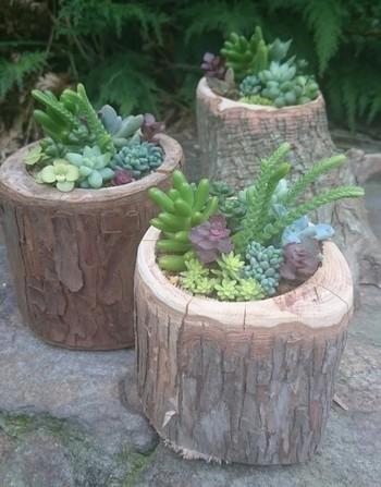 切り株を使った、可愛いくてユニークな鉢。室内・室外を問わず、あったかい雰囲気づくりに一役かってくれそう。