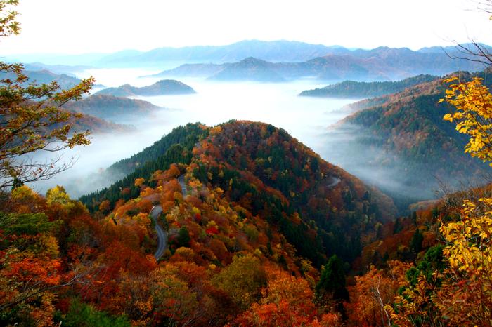 滋賀県と福井県の県境に位置する「小入峠(おにゅうとうげ)」からは小入谷や周辺の山々を一望することができます。おすすめは早朝。運が良ければ雲海を見ることができますよ。紅葉に彩られた尾根を走る林道はまるで天空の道。朝日と共に見る景色は神々しくまるで別世界に来たようです。