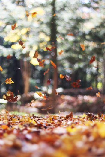 秋と言ったらなんでしょう?スポーツの秋?それとも芸術の秋?いろいろとありますよね?でもエネルギッシュな熱い夏を終え、少し体を休めるようなスローな秋の過ごし方はいかがでしょうか?