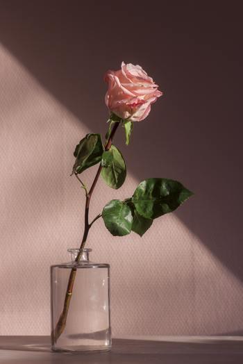 「本当の愛」を知りたければ、愛し続けること。愛せない日もあるでしょう。大嫌いな日もあるでしょう。他の誰かが羨ましくなったり、ステキに見えたり・・・でも、愛し続けた先には、どんな本当の愛があるのでしょう?見てみたいとは思いませんか?