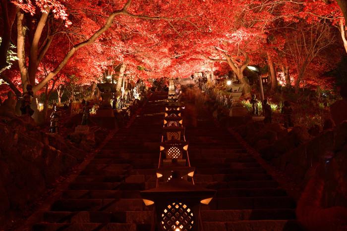 「大山寺(おおやまでら)」の参道にある階段のモミジが紅に染まり、真っ赤なトンネルができあがります。夜のライトアップもおすすめですよ。ほのかな光を灯す灯篭が並んだ景色は幻想的。階段を登り振り返りかえれば、相模湾と美しい夜景が広がっており紅葉と共に楽しめます。